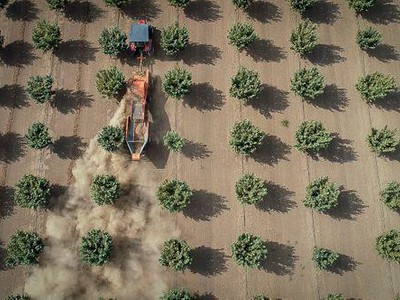Oregon Hazelnut Production Expected To Double By 2025