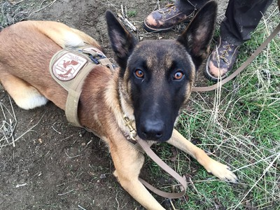 New Wildlife Officer Speaks Dutch, Has 4 Legs And A Tail
