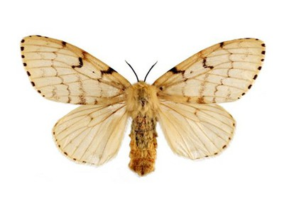 Asian Gypsy Moths Discovered At Port Of Portland