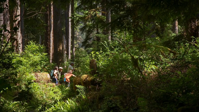 A group of veterans deal with stress and other conditions that resulted from their military service by hiking together in Olympic National Park and its neighboring forestlands.