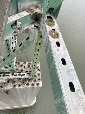 Mid-channel, the bridge is thick with cormorant nests and coated in guano.