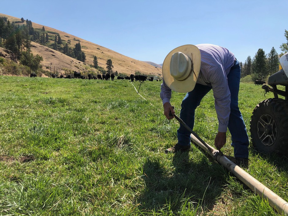 Terry Anderson outside of Pendleton, Oregon, fixes his solid-set irrigation lines. Cows love to rub against the spigots and knock them over, he says. Anderson had a cow mysteriously killed on his place back in the 1980s.