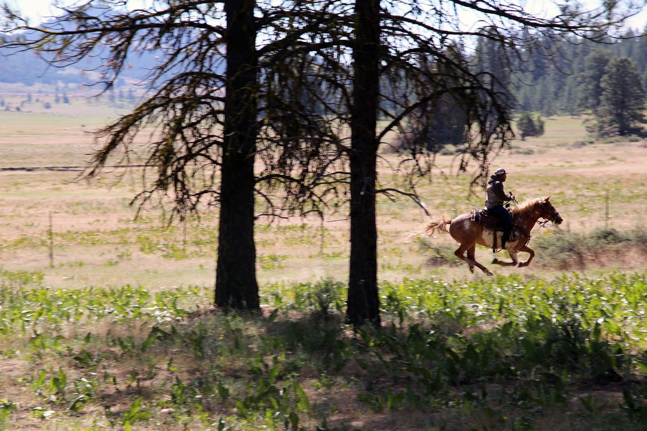 A cowboy gallops to shore up a perimeter line of a wild horse chase on the Warm Springs Reservation on June 22, 2019.