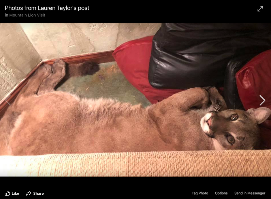 Screenshot of a Facebook photo. It is one of several images and video clips posted to Facebook by an Ashland woman on July 7, 2018, along with a post describing an amicable encounter with a cougar inside her house.