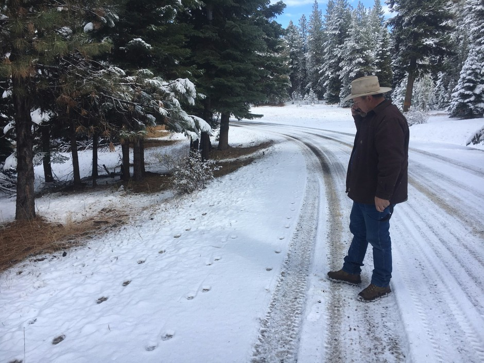 Todd Nash, rancher andWallowa Countycommissioner, examines wolf tracks on a road in the Wallowa-Whitman National Forest, which leads up to a pasture where his cattle graze.