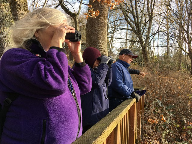 Dozens of people signed up to watch chum salmon spawning in a rare patch of gravel along the Columbia River in Vancouver. The property is managed for conservation by the Columbia Land Trust.