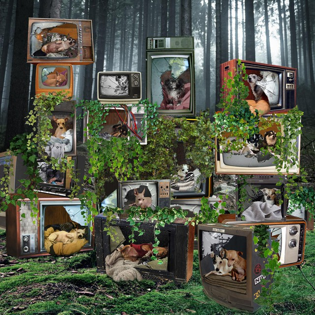 """In addition to gathering documentary footage at Chernobyl, Julia Oldham gathered photos for constructed collages, inspired by dogs in the exclusion zone. """"I thought it was an interesting way of approaching really scary issues, to create an idealized post-human world full of dogs."""""""