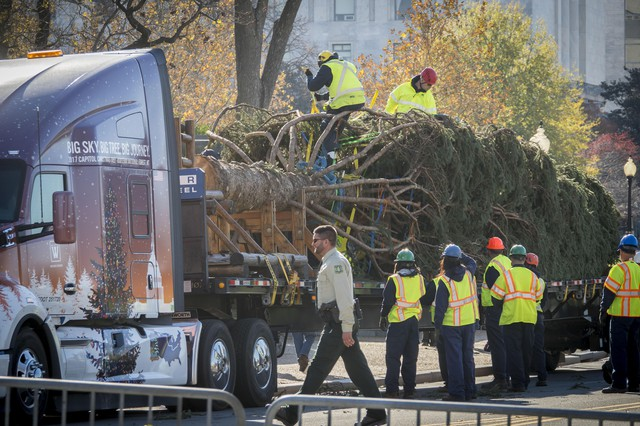 Workers unload the Capitol Christmas Tree, an Engelmann Spruce from the Kootenai National Forest in Montana, on November 27, 2017.