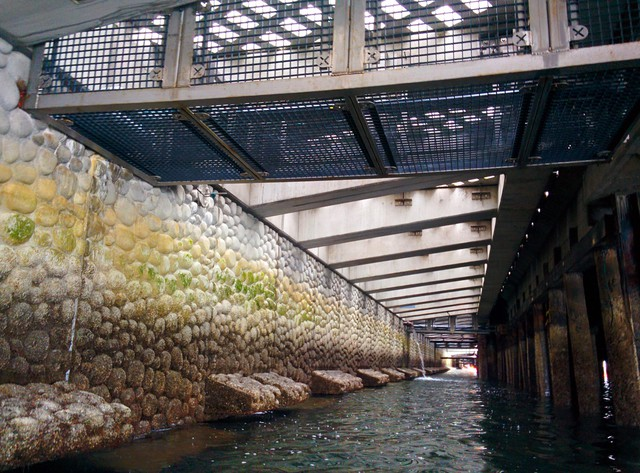 A view of the new seawall being installed on the Seattle waterfront. It's designed to help juvenile salmon.