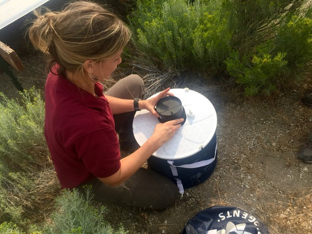 Emily Weidner, a biologist with the U.S. Fish and Wildlife Service, sets a trap to collect mosquitoes. She's helping study how many West Nile-carrying mosquitoes are in Oregon's sagebrush country.
