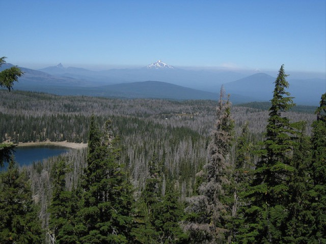 Damage from mountain pine beetles on lodgepole and whitebark pine trees in Deschutes National Forest.