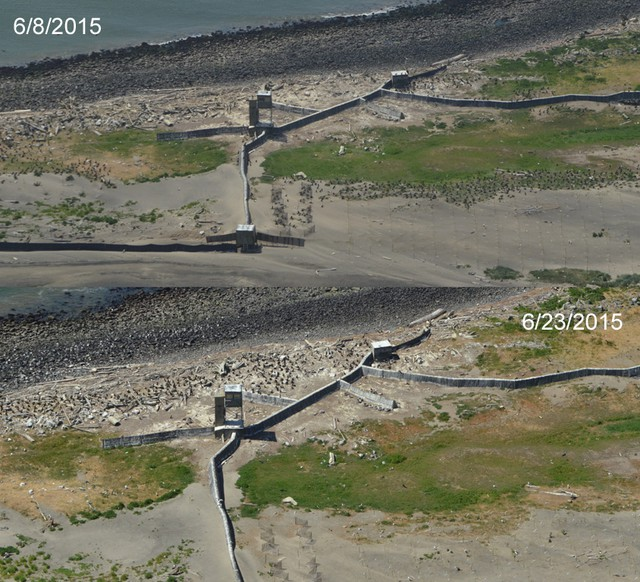 A composite of two aerial photos taken on two different days showing fewer birds in one area of East Sand Island over time.