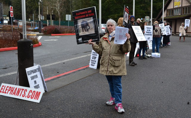 Volunteers with Free the Oregon Zoo Elephants protest Packy's memorial.