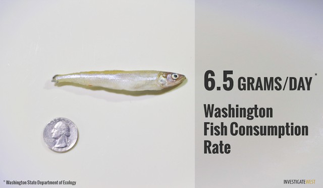 An illustration of the amount of fish that could be safely consumed each day under Washington's fish consumption standards before the adoption of more stringent water-quality rules.