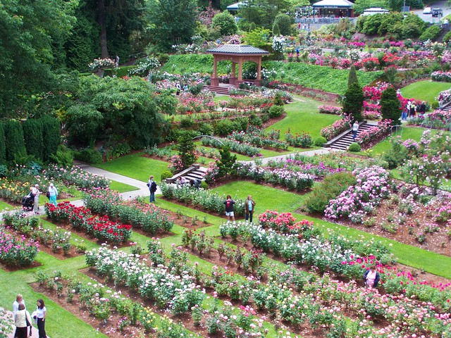 Portland S Rose Test Garden Celebrates 100 Years In A Changing