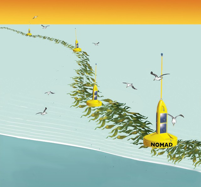 An artist's rendering of a project that could grow kelp used for biofuel in the open ocean -- that seaweed could one day power your car.