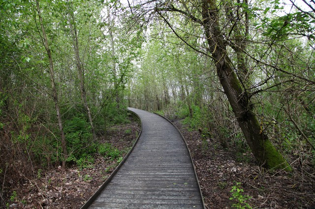 A wooden walkway draws visitors into the blind.