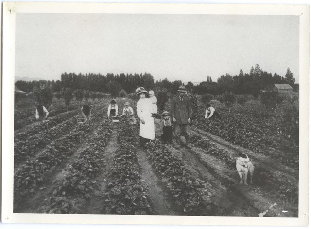 Strawberry Farming in the Hood River Valley