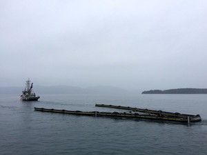 An oil spill response drill in Puget Sound.
