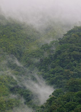 Mist in the rainforest on the slopes of the Arenal Volcano, Costa Rica.