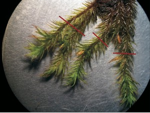 Researchers gathered samples in fall 2013. USFS says it would like to gather additional data points when funding allows.