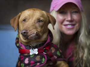 Picasso the dog has a chance at a better life thanks to Liesl Wilhardt and Loveable Dog Rescue who rescued him for a kill shelter in California.