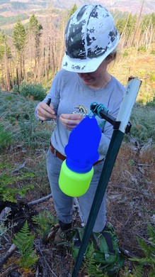 Sydney Watkins checks a blue vein trap for native bees on BLM land.