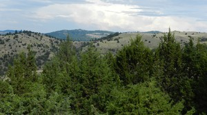 Juniper were once sparse on the Central and Eastern Oregon landscape. Due to fire suppression and grazing, the trees are 10 times as dense as they were in 1870.