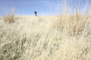Cheatgrass dominates the landscape in the Owyhee. The invasive species is a problem in much of Eastern Oregon.