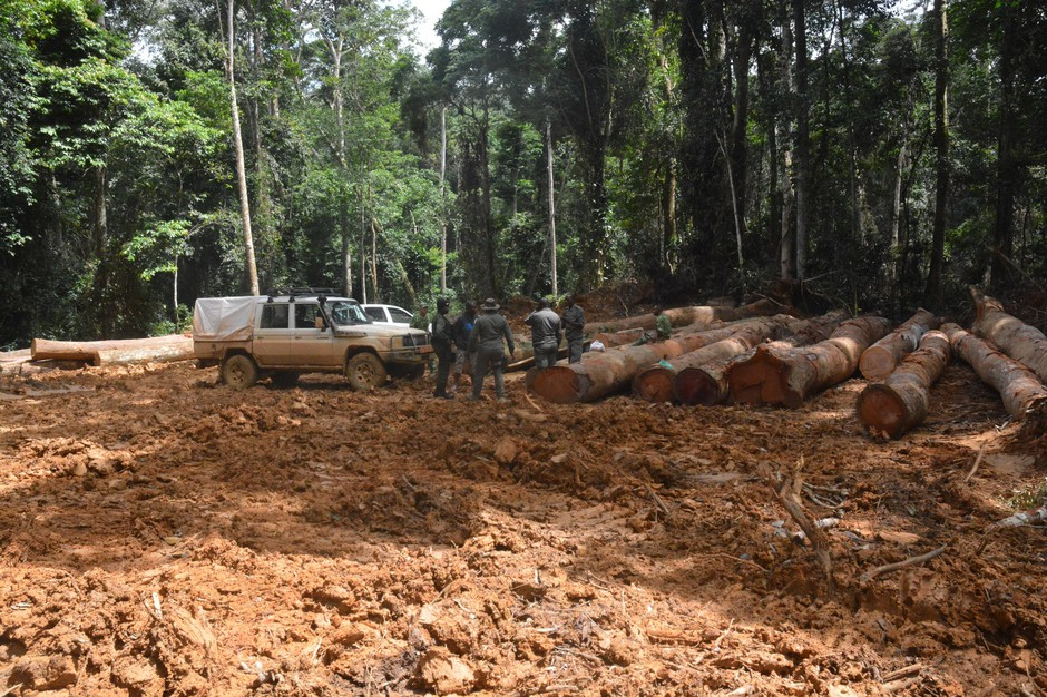 A logging operation in a tropical rainforest of westCentral Africa.