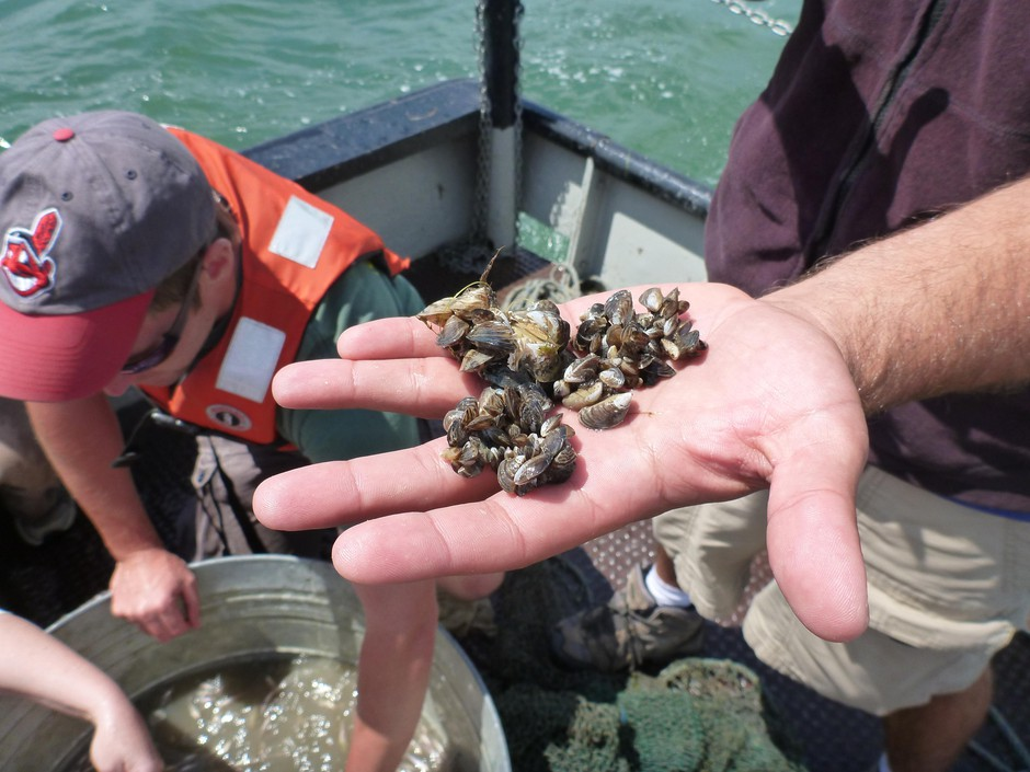 Quagga mussels found during a Great Lakes education workshop.