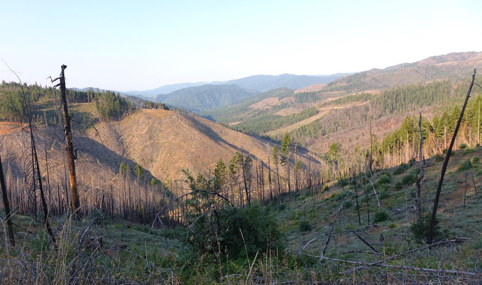 """O&C Lands """"checkerboard"""" in southwest Oregon four years after the Douglas Complex Fire."""