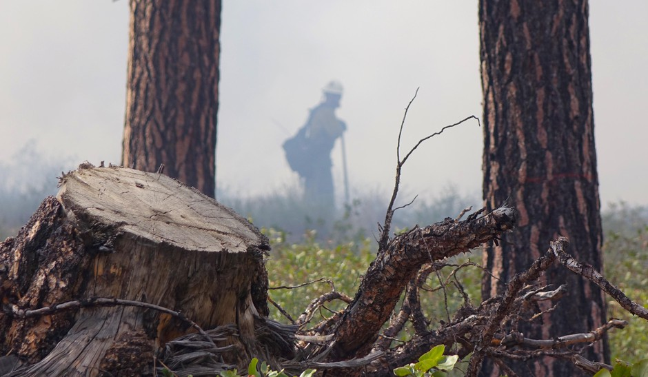 Thinning, mowing and prescribed fire are used in Ponderosa pine forests to maintain an open forest floor.