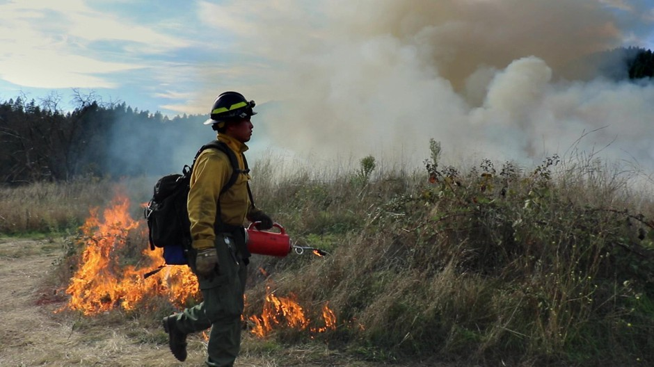 The Karuk Tribe has partnered with other local organizations like the MId Klamath Watershed Council and Klamath River TREX to reintroduce fire to the land with prescribed burns.