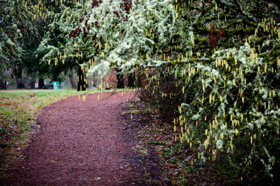 Pre's Trail winds through Alton Baker Park in Eugene, Ore., Saturday, Jan. 19, 2019.