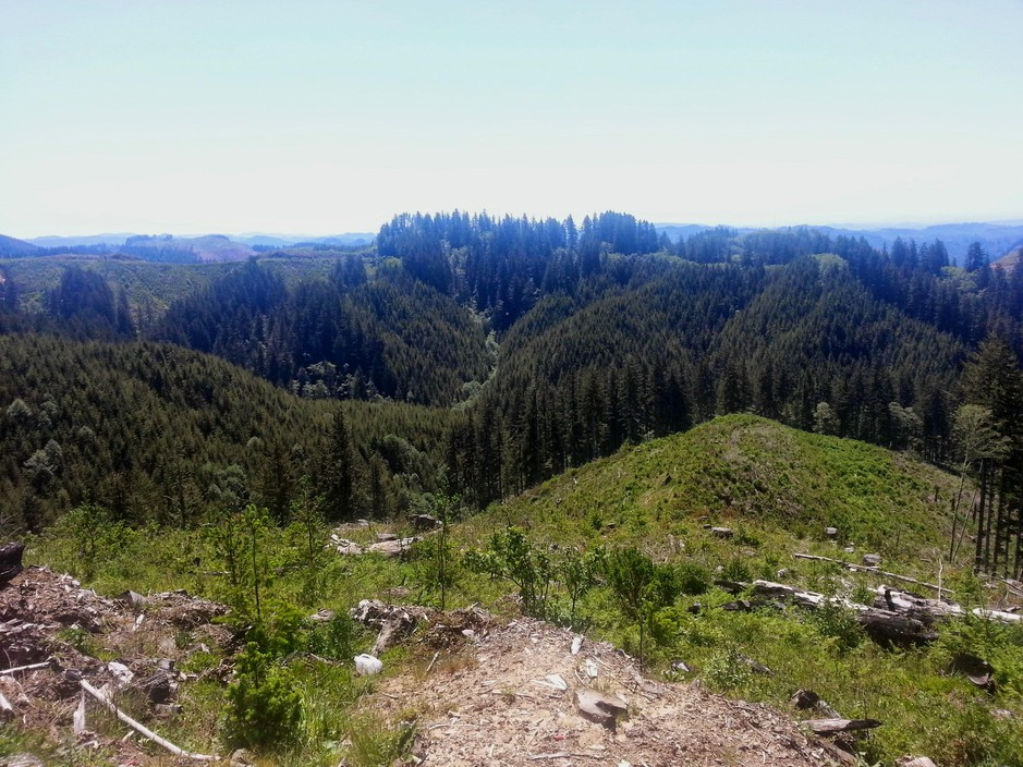 Elliott State Forest near Coos Bay, Ore.