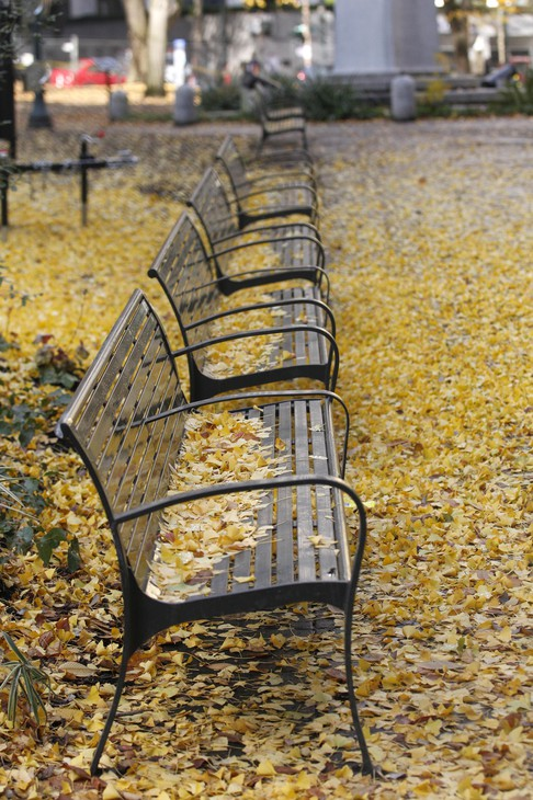 Park benches are shown covered in leaves in Lownsdale Square Wednesday, Nov. 30, 2011, in Portland, Ore.