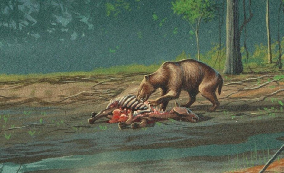 The John Day mesonychid was initially mis-identified as Hemipsaladon grandis, another large predator that would have shared a range with the mesonychid.