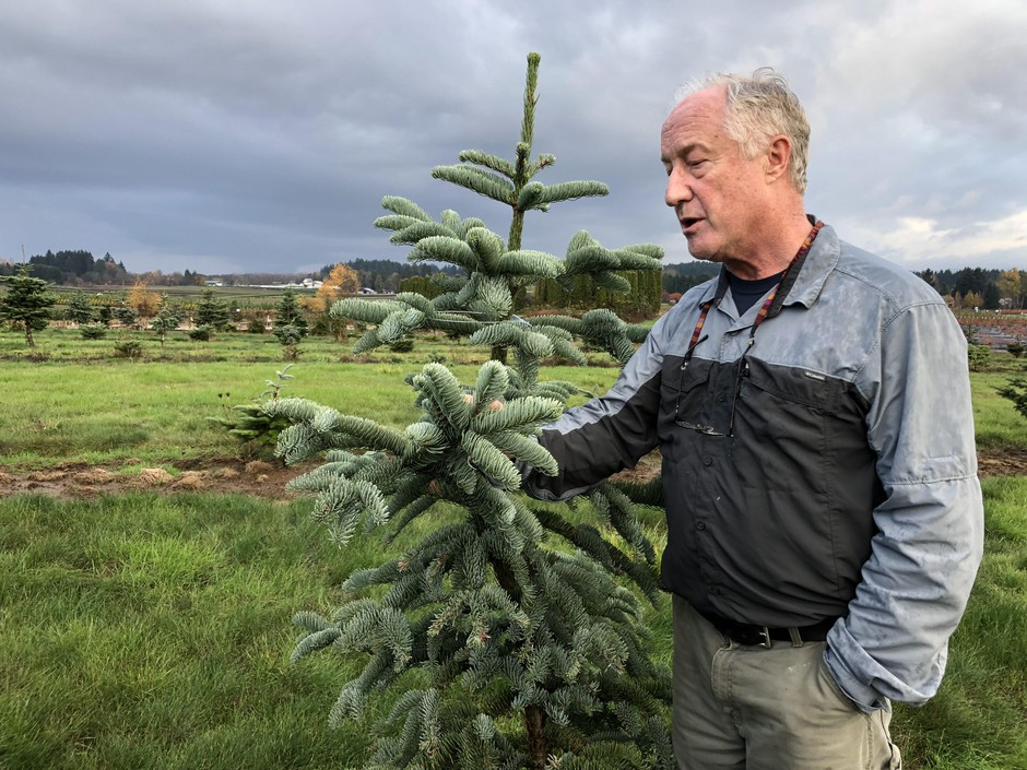 Chal Landgren is a Christmas tree expert with Oregon State University.