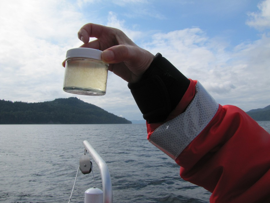 Researchers sample for phytoplankton that are harmful to salmon in Puget Sound.