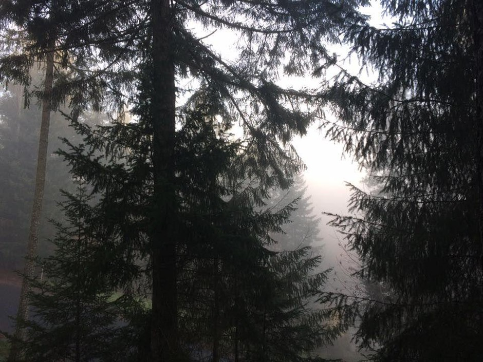 Early morning fog is visible through trees in this undated file photo.
